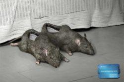 Тапки в виде крыс
