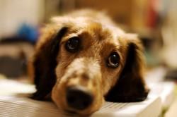 Как социальная помощь помогла развитию бизнеса и бездомным собакам