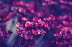 Бизнес-план цветочного магазина - как открыть