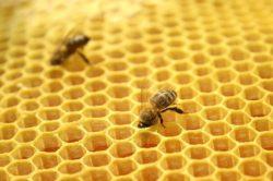Бизнес-план пчеловодства - бесплатно