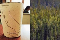 Биоразлагаемые кофейные стаканчики с семенами местных растений