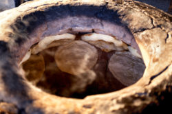 Франшиза «Хлеб изтандыра»