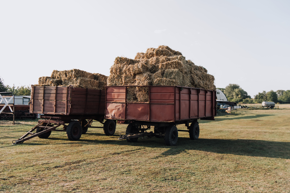 Бизнес план фермерского хозяйства с анализом рисков и ошибок