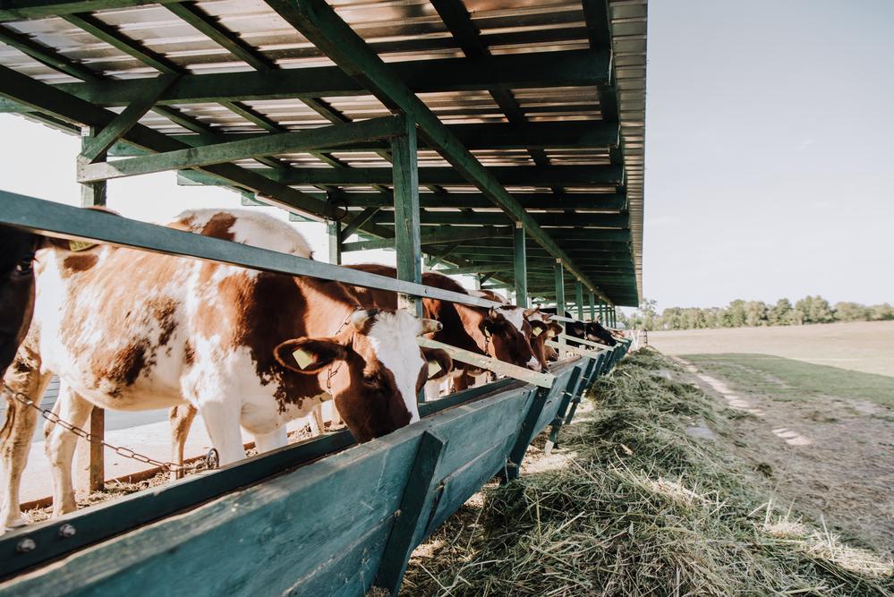 Бизнес план развития фермерского хозяйства и выбор места