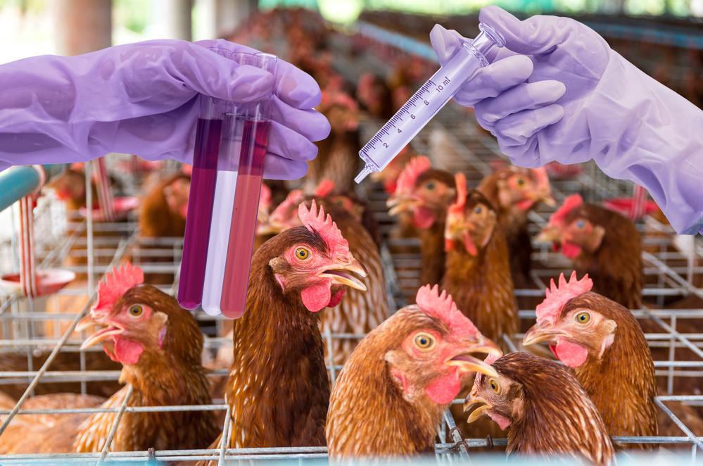 Выход проекта птицефабрики в ноль и достижения окупаемости зависит от вида реализуемых продуктов