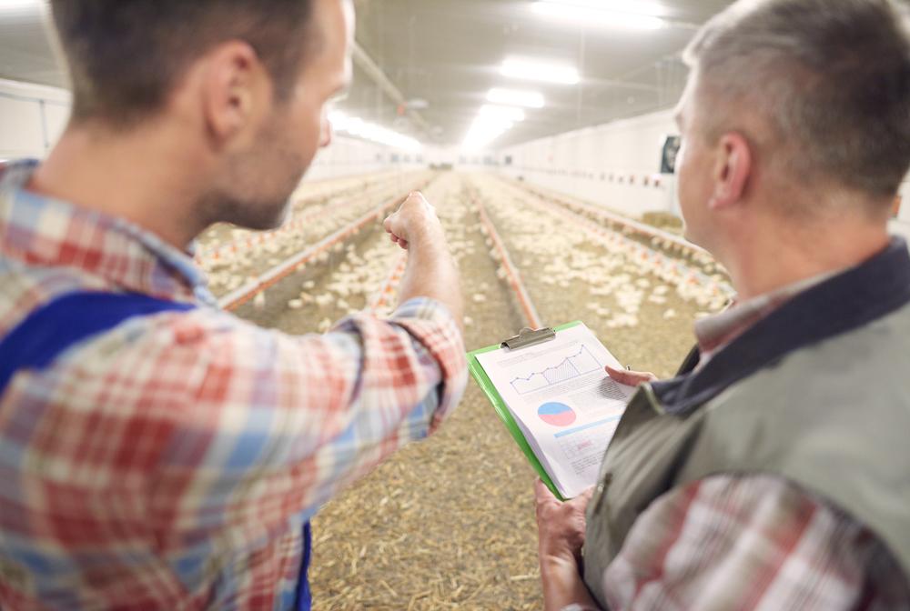Штат сотрудников для работы птицефабрики по производству яиц