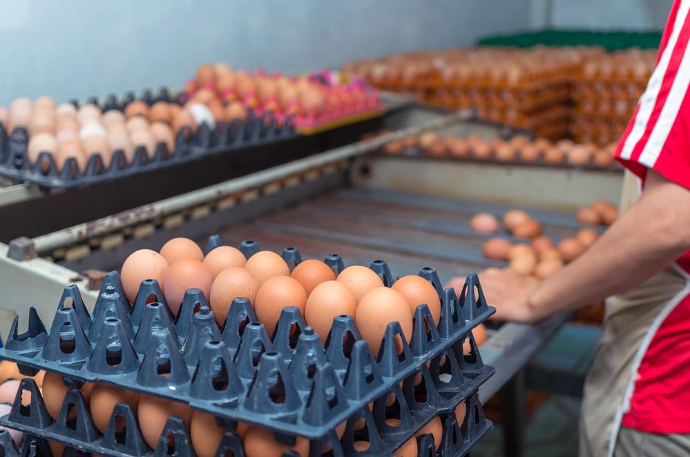 Маркетинговый план птицефермы: развитие бизнеса с нуля