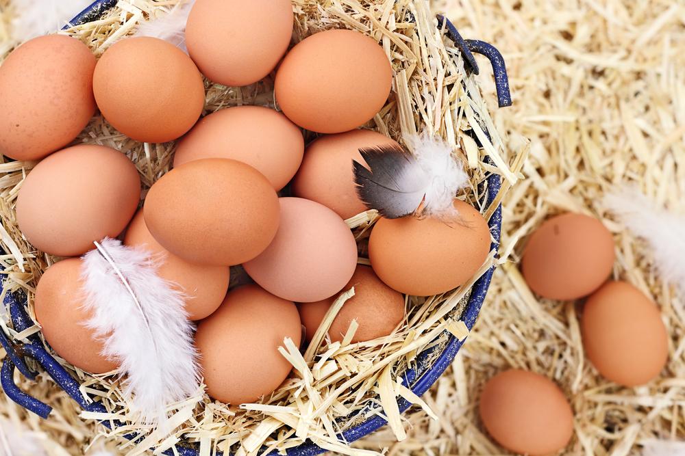 Как открыть птицеферму с нуля - анализируем риски будущего предприятия