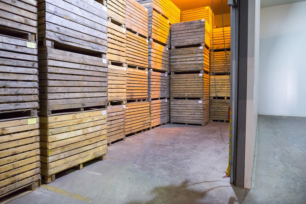 Открытие склада для хранения чеснока
