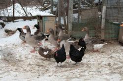 бизнес план разведение птиц