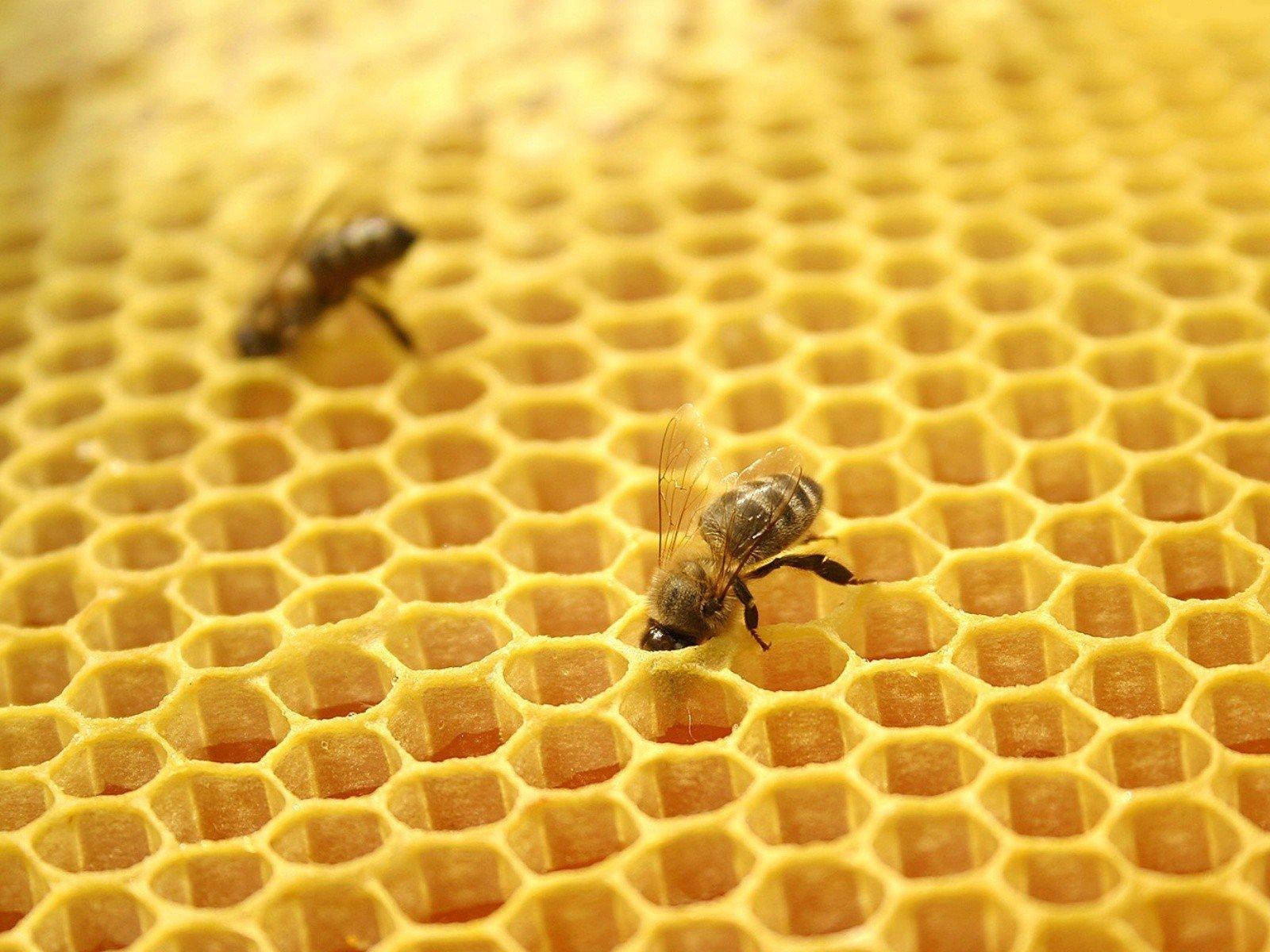 Готовый бизнес-план пчеловодство для начинающих