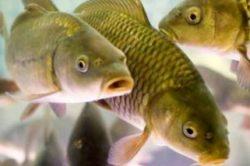 Торговля рыбой