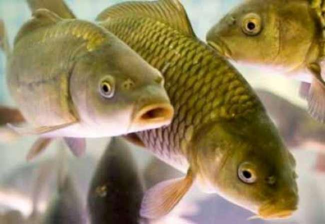Торговля живой рыбой с машины